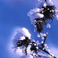 зимняя синева :: Наталья Крюкова