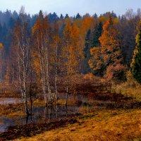 цвета осени :: Наталья Крюкова
