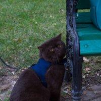 большой и грустный кот гуляет :: Анна Головашкина