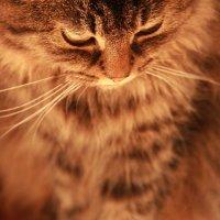 Кошка (1) :: Alina Fly