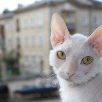 Кошка на окошке :: Ольга Чазова