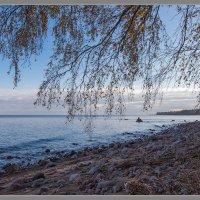 Прогулки вдоль берега. :: Юрий