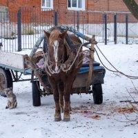 Всем зимой холодно :: Анатолий Портнов