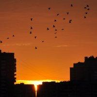 Рассвет над городом :: Андрей Лошаков