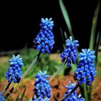 цветы :: gribushko грибушко Николай