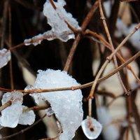 Зима отступает... :: Николай Денежкин