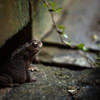 тропическая жаба :: Антон Лихач