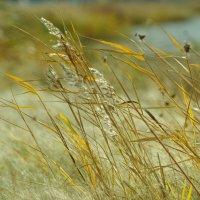 Сентябрьские травы :: Olga Starshova