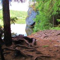 В парке Оленьи ручьи :: Геннадий Ячменев