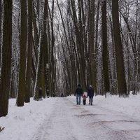 Декабрь в парке :: Владимир Белов