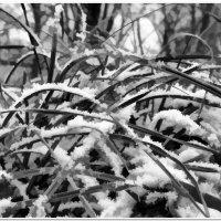 Первый снег #1 :: Евгений Кочуров