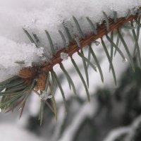 Тает снег :: Марина Гимбург