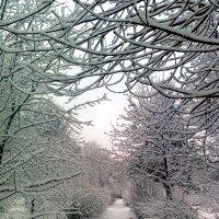 зима :: Надежда Ужанова