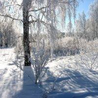 Зимний денёк :: Геннадий Ячменев