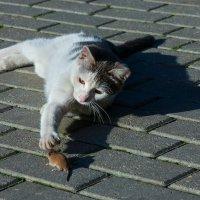 кошки-мышки :: Борис Иванов