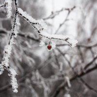 зима пришла :) :: Atuan M
