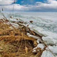 Март на Куршском заливе :: Владимир Самсонов