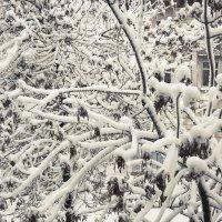 white snow :: Александра Кузнецова