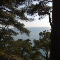 На горе над морем :: Ольга Карпачева