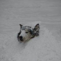 Дождался снега :: Екатерина Ртищева