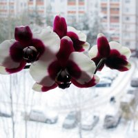 Зимнее окно. :: Надежда Ивашкина
