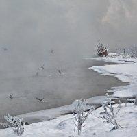Бодрое утро :: Ольга Ковшикова