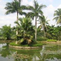 Тропические растения :: Анастасия Меркулова