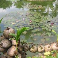 Водоем в ботаническом саду :: Анастасия Меркулова