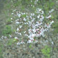 Весна ) :: Алексей Хвастунов