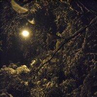 Под светом фонаря-луны :: Олеся Бе бе