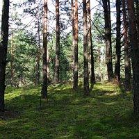 лес :: Наталья