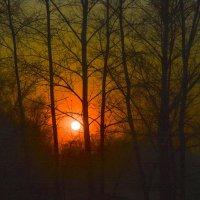 Зимнее солнце :: юрий Амосов