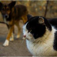 Друзі :: Sunny_cat -