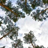 Небо :: ViP_ Photographer