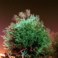 Танцующее дерево :: Игорь Герман