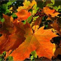 Листья осени. :: Антонина Гугаева