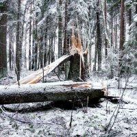 Первый снег :: Дима Хессе