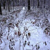 Малина под снегом :: Александр Садовский