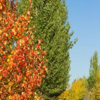 Осень в парке :: Galiya T.