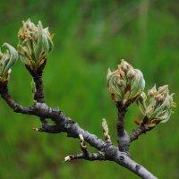 Весна :: Ирина Шпаковская
