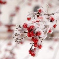 зима :: Люба Забелкина