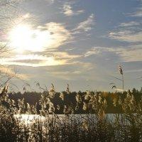 Озеро :: Анастасия Багрова