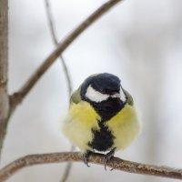 Холодно брр... :: Сергей Адигамов