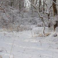 Зима в лесу.. :: Юрий Стародубцев