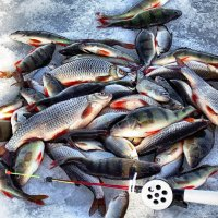 рыбалка :: evgeny