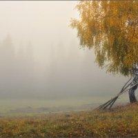 / Березовая осень / :: Влад Соколовский
