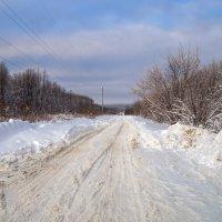 Лесная дорога. :: Сергей Исаенко