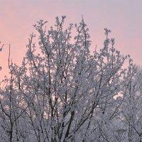Морозное утро :: Михаил Махров