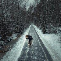 в первые морозы... :: Ирэна Мазакина