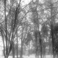 зима :: Юлия Закопайло